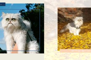 มารู้จัก Wilfred Warrior แมวหน้าแปลก กับคลิป Viral สุดฮาที่มีคนตามมากกว่า 1 ล้านคน